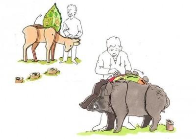 sanglier et chevreuil