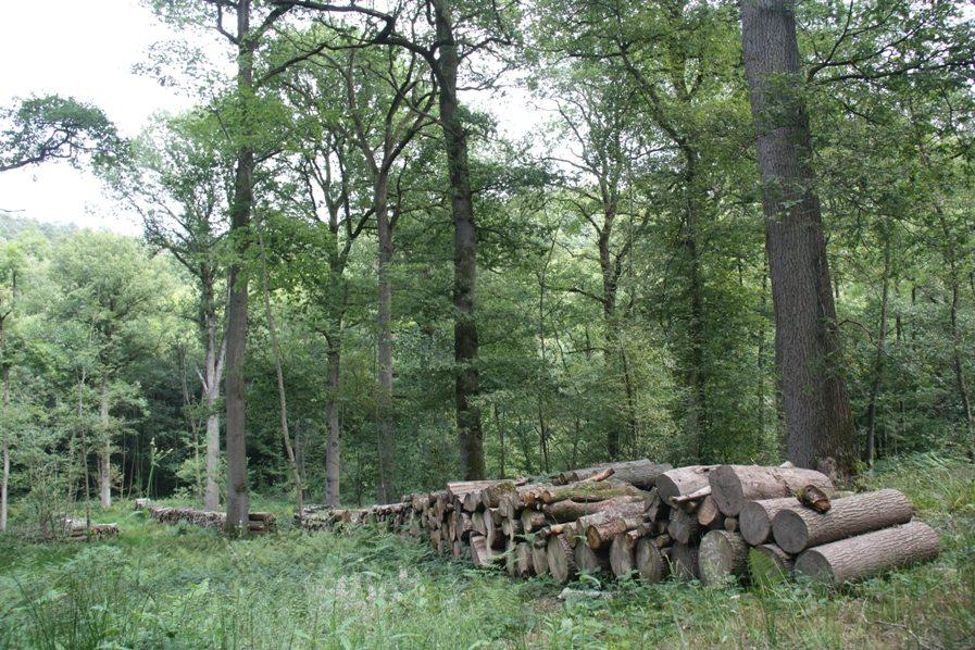 Enquête auprès des propriétaires forestiers