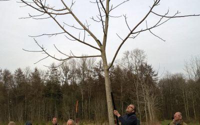 """Retour sur la première formation """"Forêt"""""""