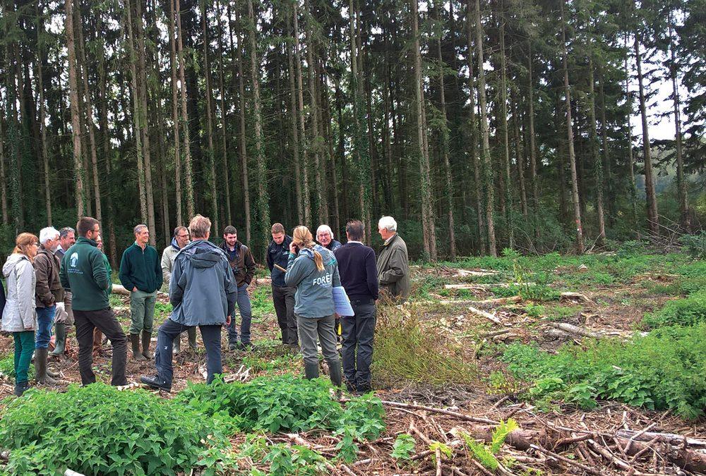 Une association forestière au Pays des Tiges et Chavées
