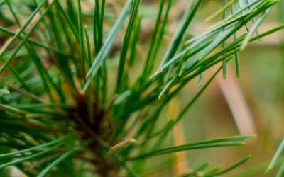 Module Forêt à destination des guides nature, guides touristiques, paysaguides, …