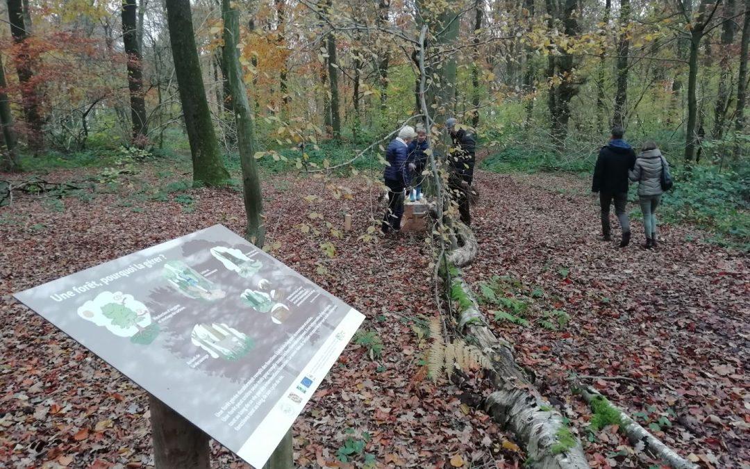 Semaine de l'arbre à Gesves – A la redécouverte du Bois didactique