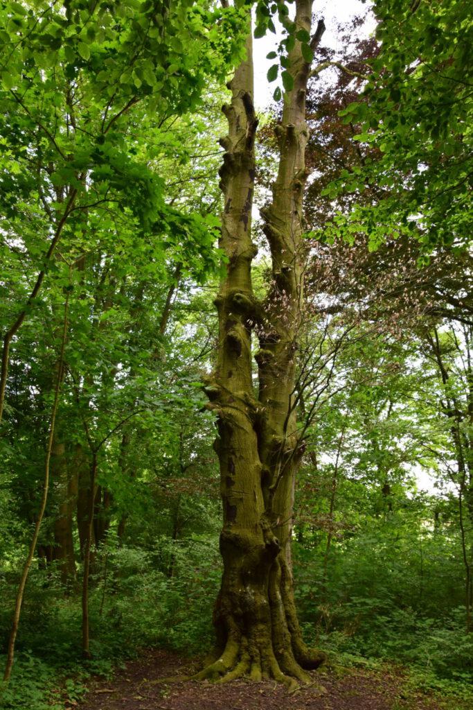 Forêt résiliente: plantez pour l'avenir !