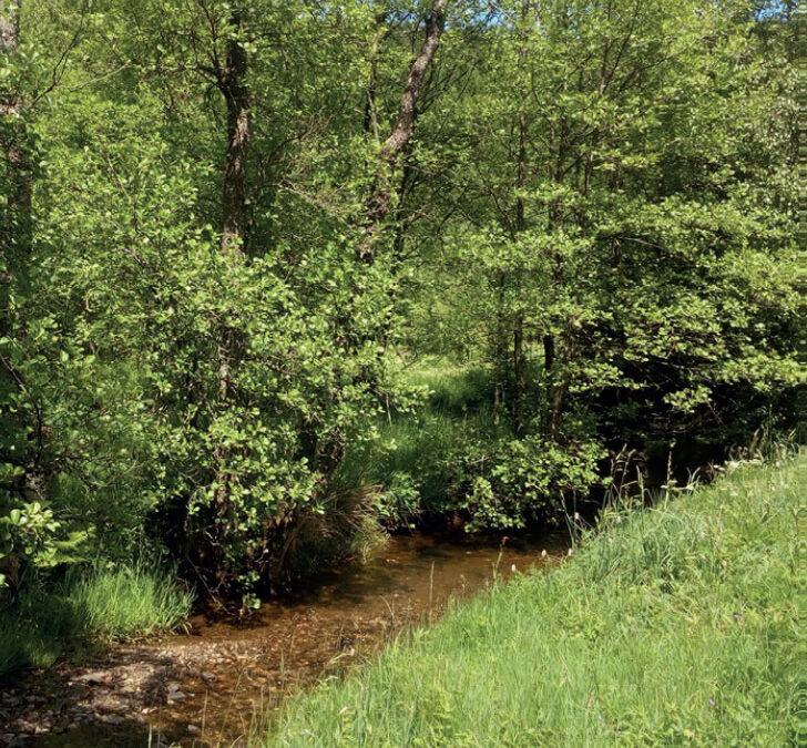 Les couverts végétaux permanents : une opportunité de valorisation ?