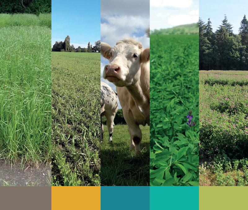 A la découverte de l'autonomie alimentaire : 16 témoignages d'éleveurs de Condroz, Famenne et Ardenne.